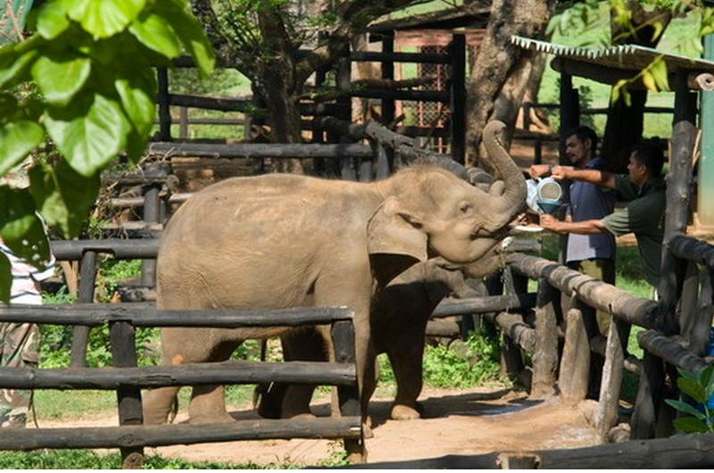 Voyage Incentive Sri Lanka 5