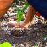 Activité team building nature : planter et préserver la forêt !
