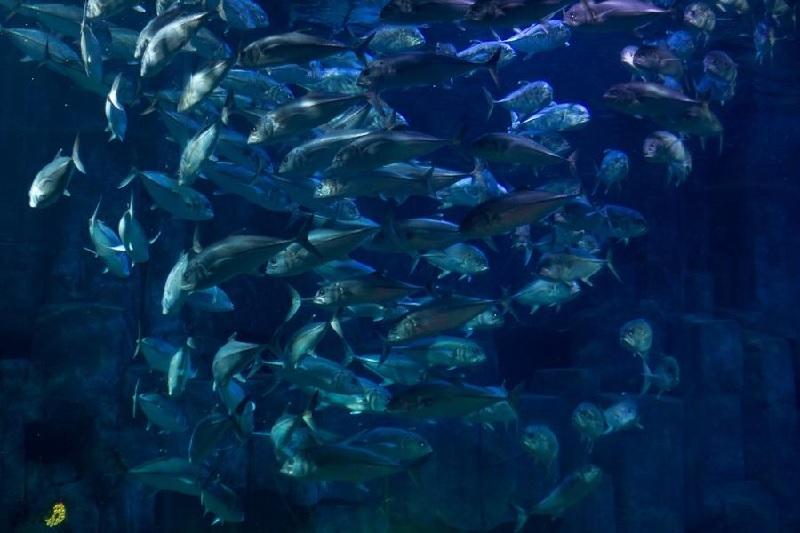 Soirée 20 000 lieues sous les mers 2